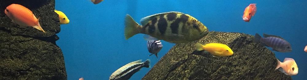 fish-1714838_1280.jpg